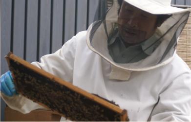 事務所で蜂を飼育し、蜂蜜由来のロウワックスを作る